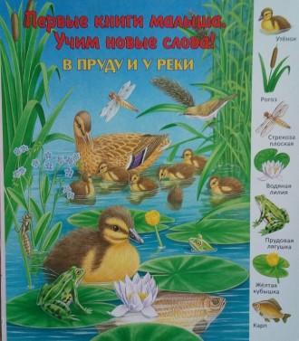 Картинки по запросу в пруду и у реки